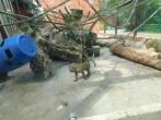 Pagalba Lietuvos zoologijos sodo darbuotojams