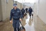 Tarnybiniai šunys dalyvavo patikrinimuose ir pratybose