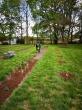 Nuteistieji tvarkė Vytauto Didžiojo universiteto Botanikos sodo teritoriją