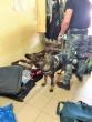 Šiaulių tardymo izoliatoriuje narkotikų ieškojo policijos tarnybinis šuo