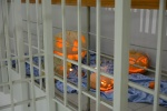 Kauno tardymo izoliatoriaus koridorių papuošė nuteistųjų išskaptuoti moliūgai