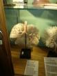 Nuteistieji lankėsi Lietuvos sveikatos mokslų universiteto anatomijos muziejuje